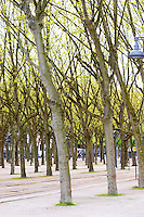 esplanade des quinconces plane trees bordeaux france
