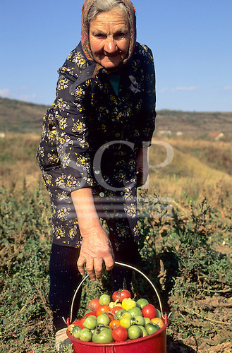 Hungary. Old woman bending over, holding a bucket brimming over with tomatoes.