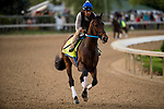 LOUISVILLE, KY - MAY 02: Combatant gallops in preparation for the Kentucky Derby at Churchill Downs on May 2, 2018 in Louisville, Kentucky. (Photo by Alex Evers/Eclipse Sportswire/Getty Images)