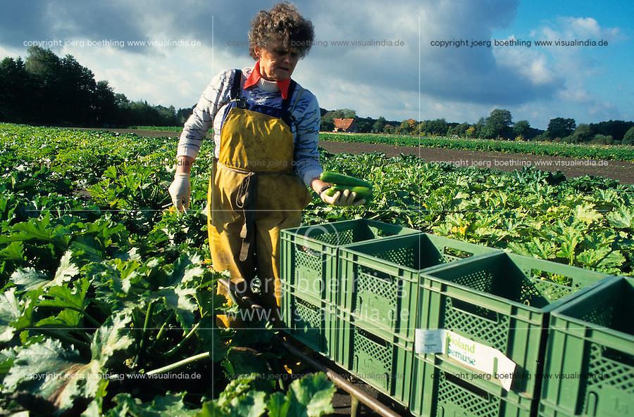 """Europa Deutschland DEU <br /> Frau erntet Zucchini Gemuese auf Bioland Hof - Felder Landwirtschaft Bio Oeko ernten oekologische xagndaz   <br /> Europe Germany <br /> woman harvest vegetables Zucchini at Bioland organic farm  - field farm women agriculture <br />    [copyright  (c) agenda / Joerg Boethling , Veroeffentlichung nur gegen Honorar und Belegexemplar an / royalties to: agenda PG   Rothestr. 66   D-22765 Hamburg   ph. ++49 40 391 907 14   e-mail: boethling@agenda-fototext.de   www.agenda-fototext.de   Bank: Hamburger Sparkasse BLZ 200 505 50  kto. 1281 120 178   IBAN: DE96 2005 0550 1281 1201 78  BIC: """"HASPDEHH""""] [#0,26,121#]"""