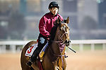 DUBAI, UAE - MARCH 23: Awardee on the track at Meydan Race Track in preparation for the Dubai World Cup Race on March 23, 2017 in Dubai, UAE. (Photo by Douglas DeFelice/Eclipse Sportswire/Getty Images)