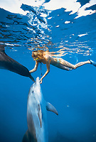 Dolphin trainer scratches Bottlenose Dolphins, Tursiops truncatus, near surface, Dolphin Reef, Eilat, Israel, Red Sea.