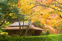 Japanese Tea House (chashitsu) named Kashin-Tei or the Flower Heart House is surrounded by the fall colors of the Japanese Maple trees on a foggy day and set in it's own Tea Garden at the Portland Japanese Garden