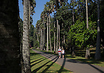 10 March 2015, Kandy, Sri Lanka:  Tourists walk along a  tree lined walkway at the Botanic Gardens in Kandy, Central Province, Sri Lanka. Kandy is the second largest city in the country after Colombo. It was the last capital of the ancient kings' era of Sri Lanka. The city lies in the midst of hills in the Kandy plateau, which crosses an area of tropical plantations, mainly tea. Kandy is both an administrative and religious city and is also the capital of the Central Province. Kandy is the home of The Temple of the Tooth Relic (Sri Dalada Maligawa), one of the most sacred places of worship in the Buddhist world. It was declared a world heritage site by UNESCO in  1988. Picture by Graham Crouch for the New York Times