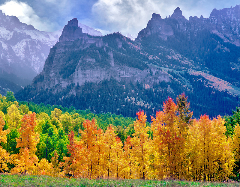Aspen trees in fall color with storm clouds. Uncompahgre National Forest, Colorado <br /> <br /> (C00232DL-9)