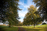 A tree lined driveway with sunny fields on either side