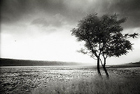 Solitary tree on Hudson River<br />