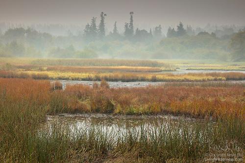 Wildfire Haze, Edmonds Marsh, Edmonds, Washington