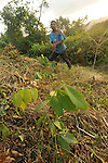 A farmer cleans undergrowth with a machete in his  field of corn and Guama, in the mountains above  Sarstoon, Guatemala,    .Guama is a large, fast growing species that when sown in rows, between basic grains, spices, and cacao creates shade that eliminates weeds, maintains humidity, fixes nitrogen in the soil, and provides wood that can be used as fuel. By improving soil conditions, it serves to increase crop yields significantly and reduce the search for new areas to cultivate. Moreover, guama increases ground cover and is welcoming to diverse species of birds and other wild animals.  Technical support for this demonstration plot was  provided by EcoLogic Development Fund.