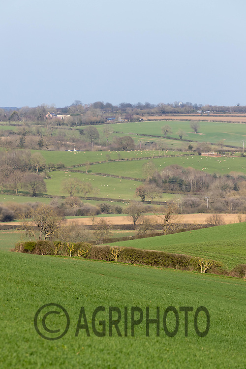 30-3-2021 Farming landscape in Rutland <br /> ©Tim Scrivener Photographer 07850 303986<br />      ....Covering Agriculture In The UK....