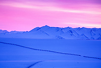 Trans Alaska oil pipeline traverses wind blown snow of the Arctic coastal plains of Alaska, Philip Smith Mountains of the Brooks Range.