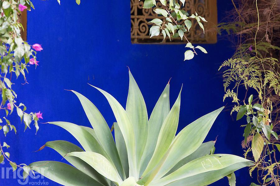 Agave at the Majorelle Garden, Marrakech, Morocco