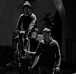DEL MAR, CA - NOVEMBER 01: Horses walk on to the track for morning workouts at Del Mar Thoroughbred Club on November 1, 2017 in Del Mar, California. (Photo by Scott Serio/Eclipse Sportswire/Breeders Cup)