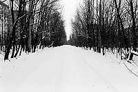 Ukraine. Province of Kiev. Pripyat. An empty road covered with snow. No traffic. Winter season. The gost town of  Pripyat is inside the 30 km exclusion zone. The dead zone has been created after the catastrophe which took place on april 1986 at 1.23 am with the explosion of reactor No 4 at Chernobyl atomic power station. 3 km distant, the workers from the Chernobyl atomic power station used to live in Pripyat. The 45'000 people from Pripyat were evacuated 36 hours after the accident. The area is higly contamined by radioactive materials, like caesium 137.   © 2006 Didier Ruef
