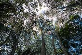 Aldeia Baú, Para State, Brazil. Filigree canopy, from below.