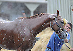 16 August 2008: 2007 Horse of the Year Curlin gets washed down after a morning workout at Saratoga Race Course in Saratoga Springs, New York.  Curlin is pointed towards the Woodward Stakes on the final day of the Saratoga Summer Meet.