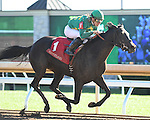 LEXINGTON, KY - OCTOBER 08:  #1 Irish Jasper wins the Thoroughbred Club of America at Keeneland on October 8, 2016 in Lexington, Kentucky. (Photo by Jessica Morgan/Eclipse Sportswire/Getty Images)
