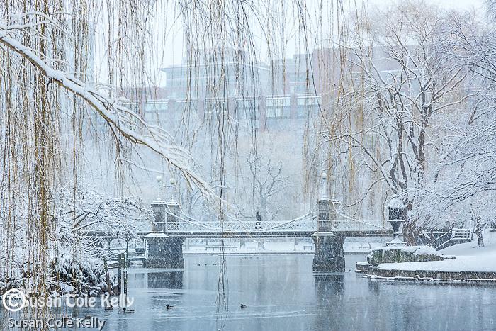 Fresh snow in the Boston Public Garden, Boston, Massachusetts, USA