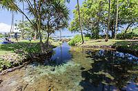Families relax near an algae-strewn pond at Richardson Beach Park, Hilo, Big Island.