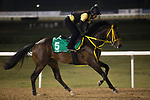 DUBAI,UNITED ARAB EMIRATES-MARCH 23: Sounds of Earth,trained by Kenichi Fujioka,exercises in preparation for the Dubai Sheema Classic at Meydan Racecourse on March 23,2017 in Dubai,United Arab Emirates (Photo by Kaz Ishida/Eclipse Sportswire/Getty Images)