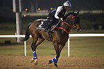 DUBAI,UNITED ARAB EMIRATES-MARCH 23: Amazing Kids,trained by John Size,exercises in preparation for the Al Quoz Sprint at Meydan Racecourse on March 23,2017 in Dubai,United Arab Emirates (Photo by Kaz Ishida/Eclipse Sportswire/Getty Images)