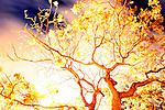 Long timed exposure of a tree on Magic Island on the island of Oahu in Honolulu, Hawaii,