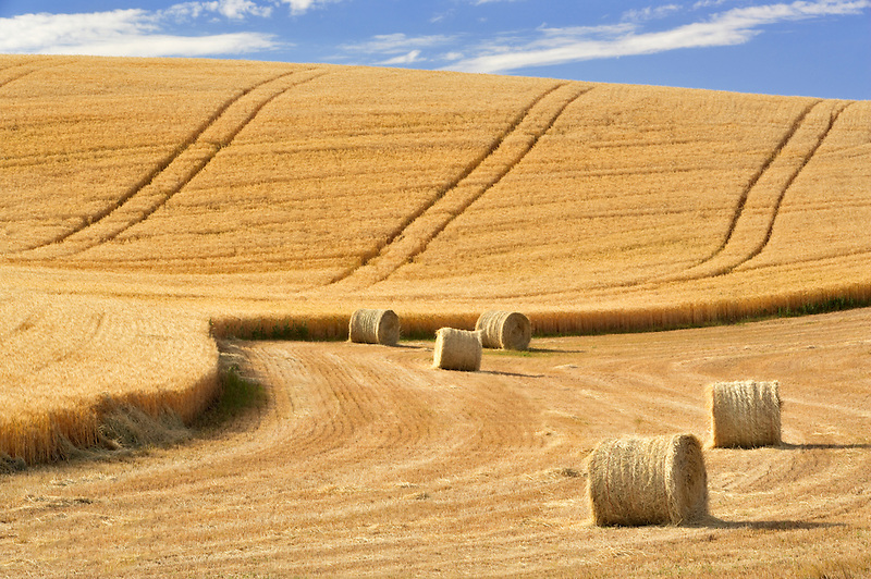 Bales of wheat straw. The Palouse. Washington.