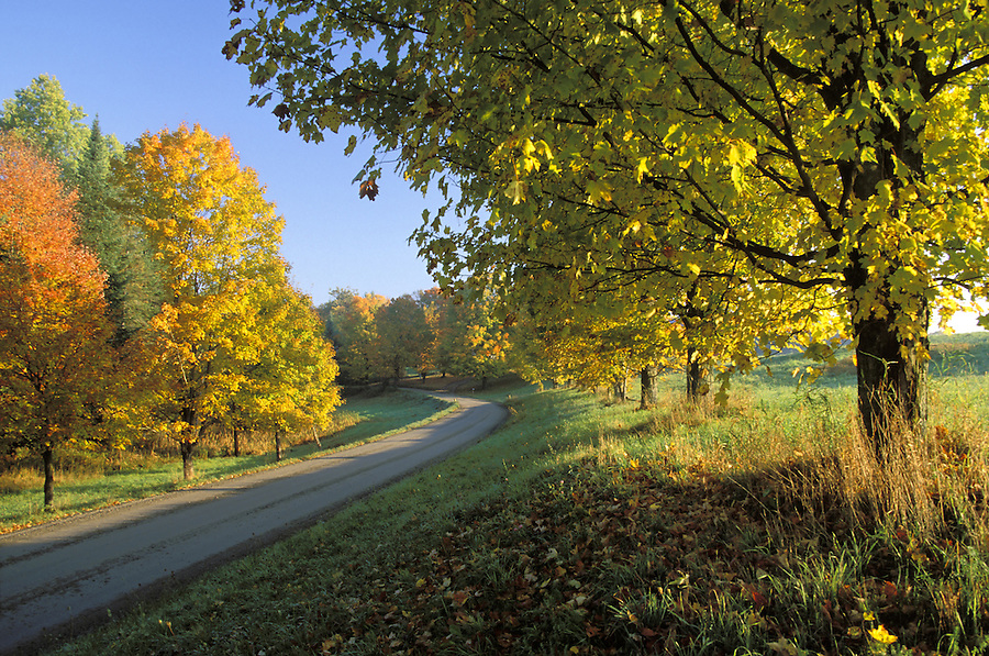 Country road lined with colorful maple trees, Lyndon, Caledonia County, VT