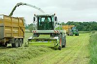 Contractors forage harvesting grass, Marton, Welshpool, Powys....Copyright..John Eveson, Dinkling Green Farm, Whitewell, Clitheroe, Lancashire. BB7 3BN.01995 61280. 07973 482705.j.r.eveson@btinternet.com.www.johneveson.com