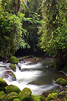 The La Paz river flows along the trails at the La Paz Waterfall Gardens and Peace Lodge, Costa Rica