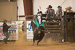 SEBRA - Chatham, VA - 10.25.2014 - Bulls & Action