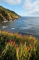 Red wildflowers overlooking the rugged Oregon Coast, Oregon, USA, North America