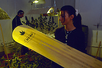 La coltura della canapa in Italia.<br /> Prodotti con base canapa, snow board