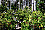 Boardwalk drops through rain forest along the Wild Pacific Trail in He-Tin-Kis Park on the west coast of Vancouver Island, Canada, near Pacific Rim National Park.