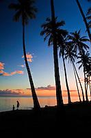 Palm tree grove at sunset, King Kamehameha's royal Kapuaiwa Coconut Grove, just west of Kaunakakai, Molokai, Hawaii