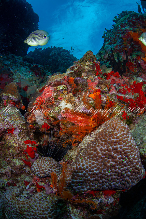 Underwater scenic<br /> Cow and Calf<br /> US Virgin Islands