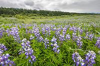 Lost Coast, Tongass National Forest, Southeast, Alaska