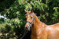 2016 MASTER CLASS: NZ Horse & Pony Magazine - Kallista Field Equestrian and Saskia Ostermeier (Tuesday 16 February) CREDIT: Libby Law COPYRIGHT: LIBBY LAW PHOTOGRAPHY/NZ Horse & Pony Magazine