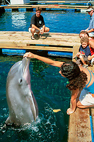 Visitors play with Bottlenose dolphin, Tursiops truncatus, Marine mammal research center, Hawaii Institute of Marine Biology, Oahu, Hawaii