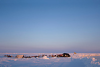 inupiaq whalers butcher a bowhead whale, Balaena mysticetus, for distribution to the villagers of Barrow, Alaska, Chukchi Sea