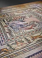 Roman mosaics - Birth of Aphrodite (Venus) Mosaic.  Poseidon Villa Ancient Zeugama, 2nd - 3rd century AD . Zeugma Mosaic Museum, Gaziantep, Turkey.  Against a grey background.