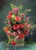 Interlitho-Helga, FLOWERS, BLUMEN, FLORES, photos+++++,flowers,KL16531,#f#, EVERYDAY