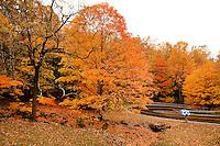 Fall 2010 - Blue Ridge Mountains