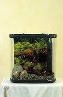 Aquarium einrichten, wird eingerichtet, schritt für Schritt