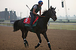 DUBAI,UNITED ARAB EMIRATES-MARCH 23: Vazirabad,trained by Alan de Royer Dupre,exercises in preparation for the Dubai Gold Cup at Meydan Racecourse on March 23,2017 in Dubai,United Arab Emirates (Photo by Kaz Ishida/Eclipse Sportswire/Getty Images)