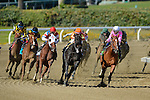 Groupie Doll, ridden by Rajiv Maragh, and trained by Buff Bradley  wins the Breeders' Cup Filly & Mare Sprint (G1) on November 2, 2013 at Santa Anita Park in Arcadia, California during the 30th running of the Breeders' Cup.