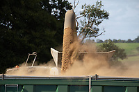 12.9.2020 Harvesting beans in Rutland <br /> ©Tim Scrivener Photographer 07850 303986<br />      ....Covering Agriculture In The UK.