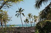 Palms on Lava Seashore