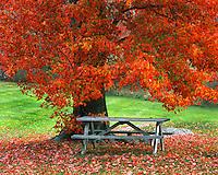 Autumn scene in West Park New York