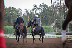 October 26, 2014: Sunset Glow exercises in preparation for the Breeders' Cup Juvenile Fillies at Santa Anita Park in Arcadia, California on October 26, 2014. Zoe Metz/ESW/CSM
